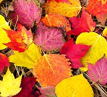 Autumn Leaves Abstract by Christina Rollo