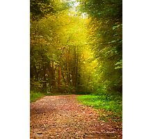 Solitude Path Landscape Photographic Print