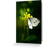 Cabbage White Butterfly Greeting Card