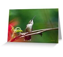 Hummingbird Look Out Greeting Card