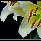 White Lily by bfburke