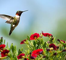 Hummingbird Frolic with Flowers by Christina Rollo