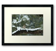 Texas Snow Bird Framed Print