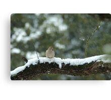 Texas Snow Bird Canvas Print