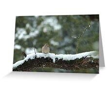 Texas Snow Bird Greeting Card