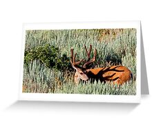 Rack Shadow Greeting Card