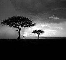 Thunderstorm at Dusk, Masai Mara by stephen foote