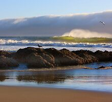 Heceta head beach, Oregon by bettywiley