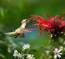 Hummingbird's Savory Summer by Christina Rollo