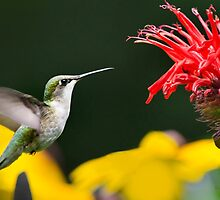 Hummingbird Snack by Christina Rollo