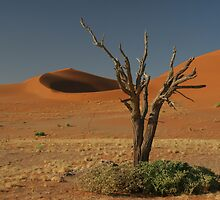 Dead tree and dunes by christopher363