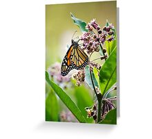Monarch Butterfly on Milkweed Flower Greeting Card