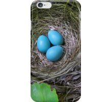 Bird's Nest with Eggs iPhone Case/Skin