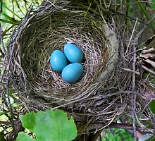 Bird's Nest with Eggs by Christina Rollo
