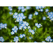 Abstract Wildflowers Forget me nots Photographic Print