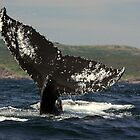 Whale of a Tail by DebYoung