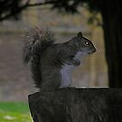 spooky squirrel by mamba