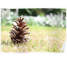 Fir Cone In Summer Poster