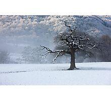 Maentwrog tree - North Wales Photographic Print