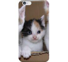 Welcome in the Big, Big, Big World Kitties iPhone Case/Skin