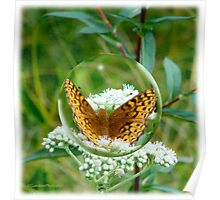 Butterfly Bubble Poster