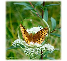 Butterfly Bubble Photographic Print