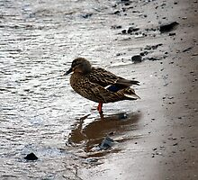Alone On The Beach by HALIFAXPHOTO