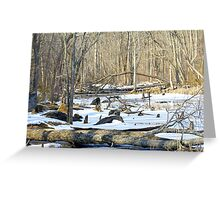 The Winter Swamp Greeting Card