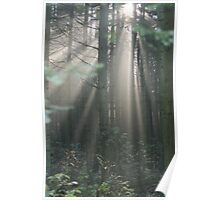 Astrup Woods Morning Poster