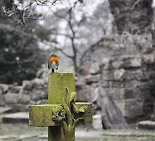 Resting Robin on the Gravestone Cross by bfburke