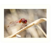 Dragonfly breakfast Art Print