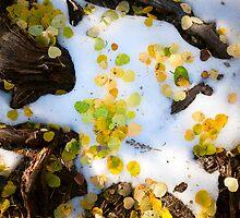 Aspen Forest Floor Detail by Zane Paxton