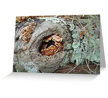 Shelf Fungi in a Knot Greeting Card