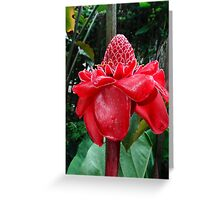 Red torch ginger flower Greeting Card