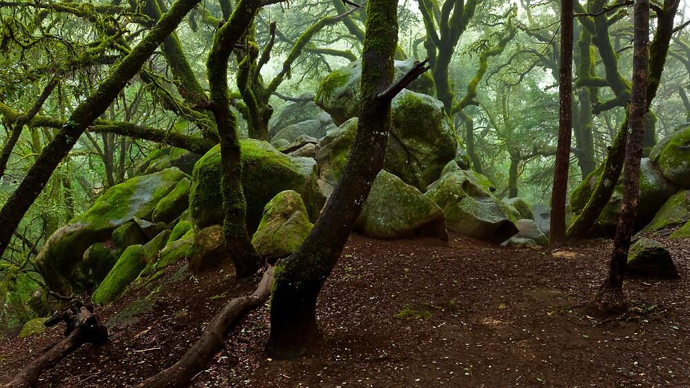 Castle Rock in the Fog by Zane Paxton