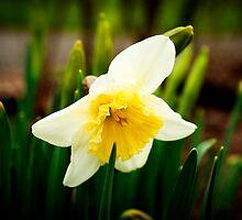 Early bloomer by Jodi Morgan