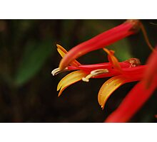 Bloom of Fire Photographic Print
