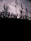 Dark Days by schizomania