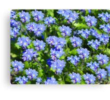 Forget Me Not - Macro Canvas Print