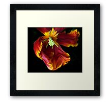 Painted Parrot Petals Framed Print