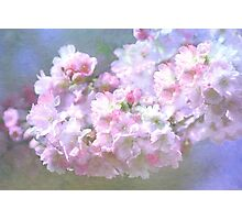 Cherry Blossom in Spring Photographic Print