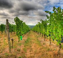Loire Valley Vineyards by sburdan