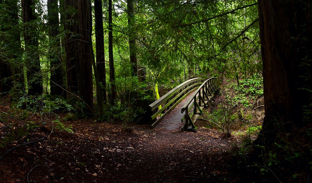 Bridge in the Redwoods by Zane Paxton