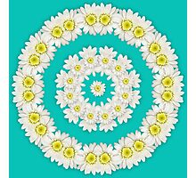 Wreath of Daisies on turquoise background Photographic Print