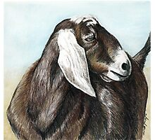 Nubian Goat Colored Pencil  Photographic Print