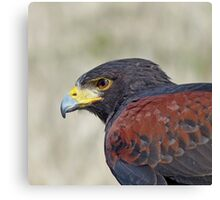 Harris Hawk Close Canvas Print