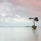 """The """"tree"""" by timothyn"""