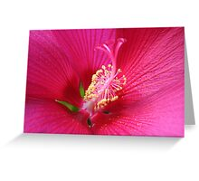 Pink Power Greeting Card