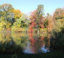 Hall's Pond in autumn by Barbara Weir