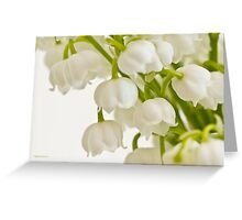 Lily Of The Valley - Macro  Greeting Card